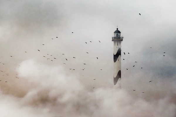 eagles-around-lighthouse-fog